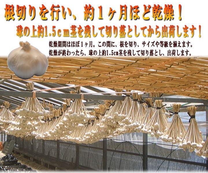 にんにく生産乾燥